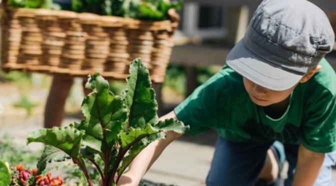 """Trại hè tiếng Anh """"Bảo Lộc English Farm 2020"""": Tiếng Anh – Du lịch – Nông trại"""